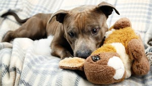 The Best Plush Toys for Your Dog
