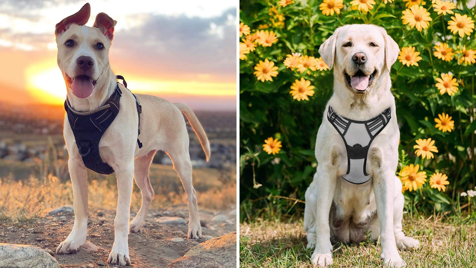 Two dogs wearing rabbitgoo harnesses.