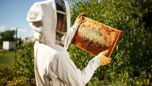 The Best Beekeeping Suits for Comfortable Protection