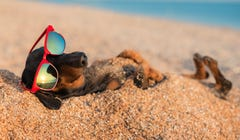 How to Plan a Dog-Friendly Vacation This Summer