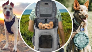 Taking Your Dog on a Hike? Here's All the Gear You'll Need