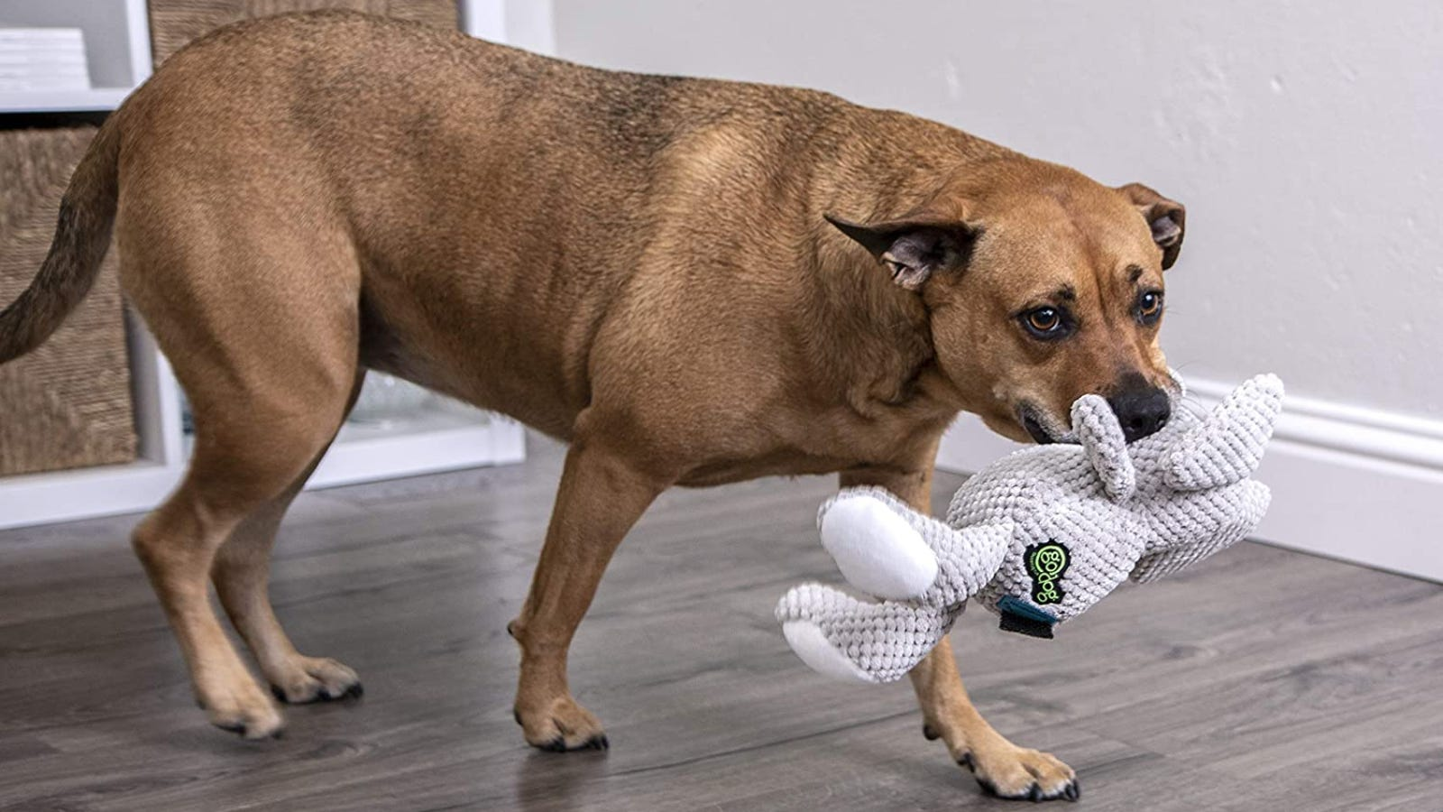 a brown dog holds a plush toy in its mouth