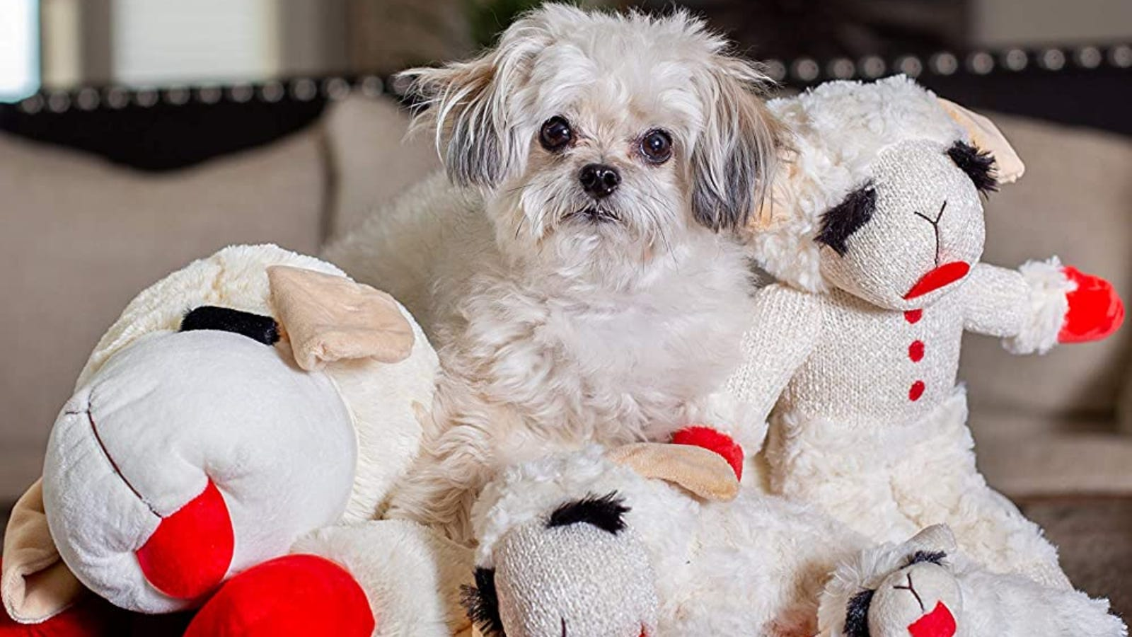 a small dog surrounded by lamb plush toys