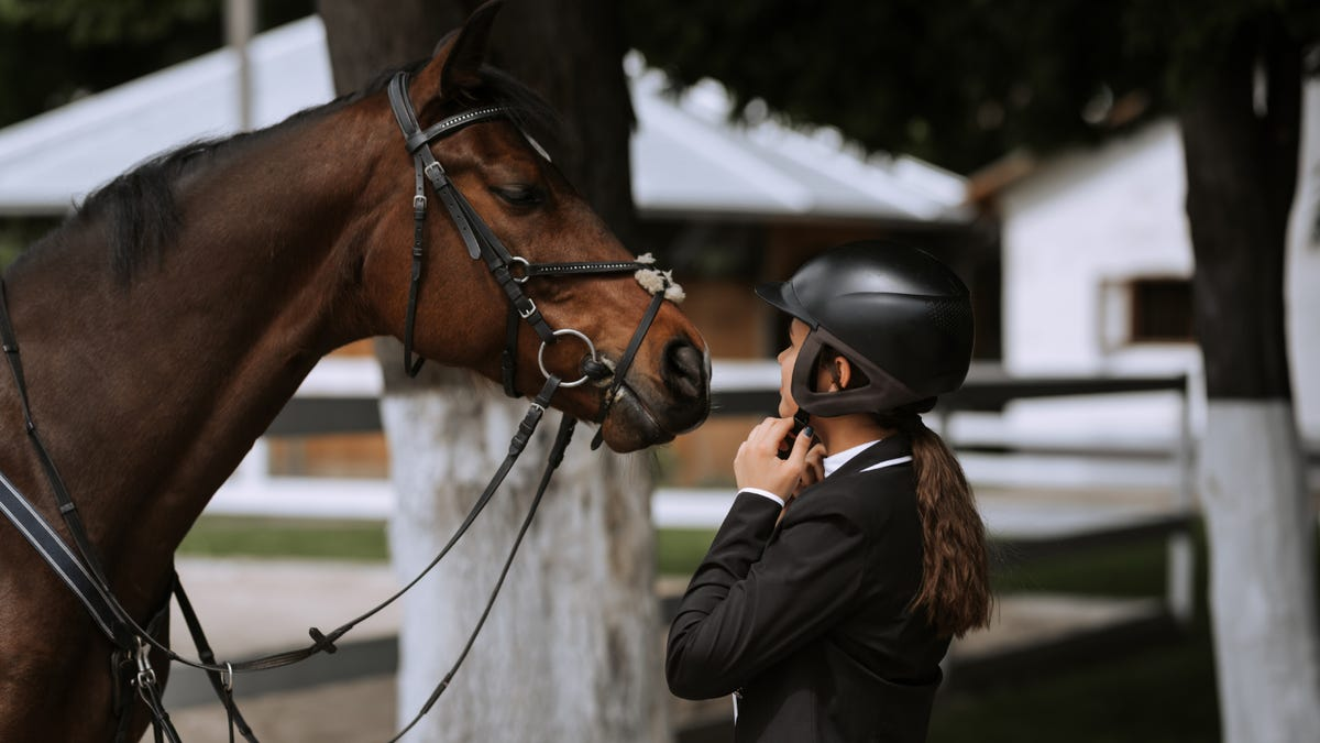 A female equestrian tightens her helmet's harness while looking at her brown horse.