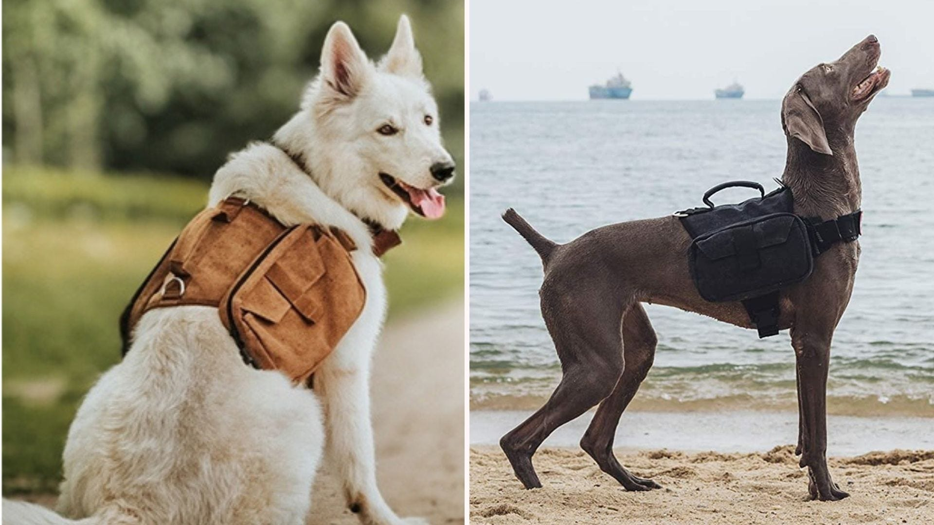 Two images featuring dogs wearing their OneTigris dog pack.