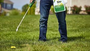 The Best Weed Killers for a Beautiful Yard