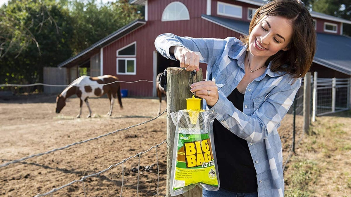 A woman hanging a flytrap bag on fence post by horse barn.