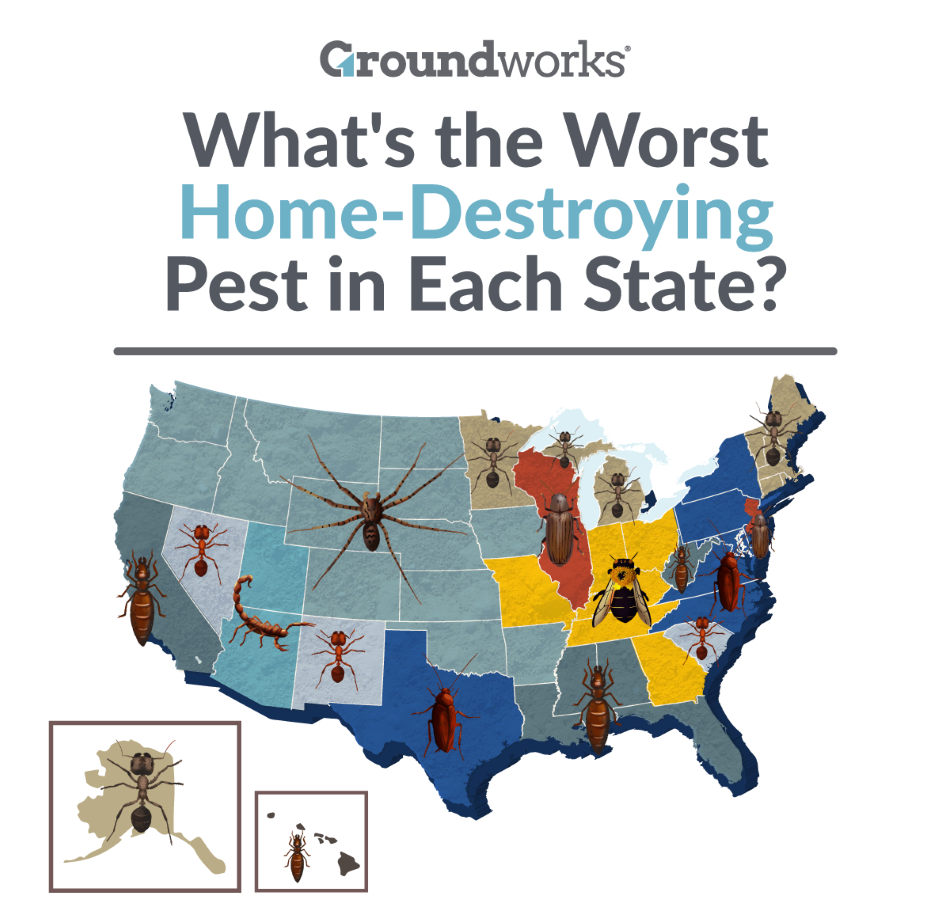 A map of the U.S. showing the most prevalent home-destroying insects in each area.