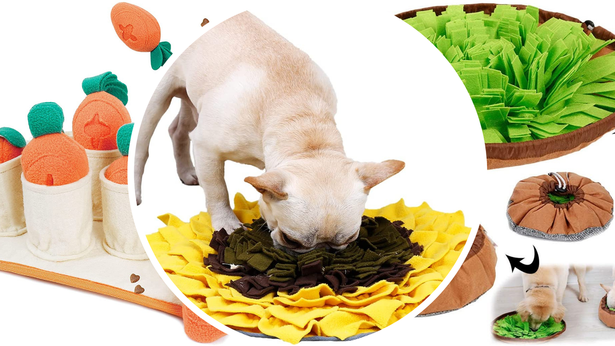 Potted carrot and plant snuffle mats, and a dog eating out of a sunflower snuffle mat.