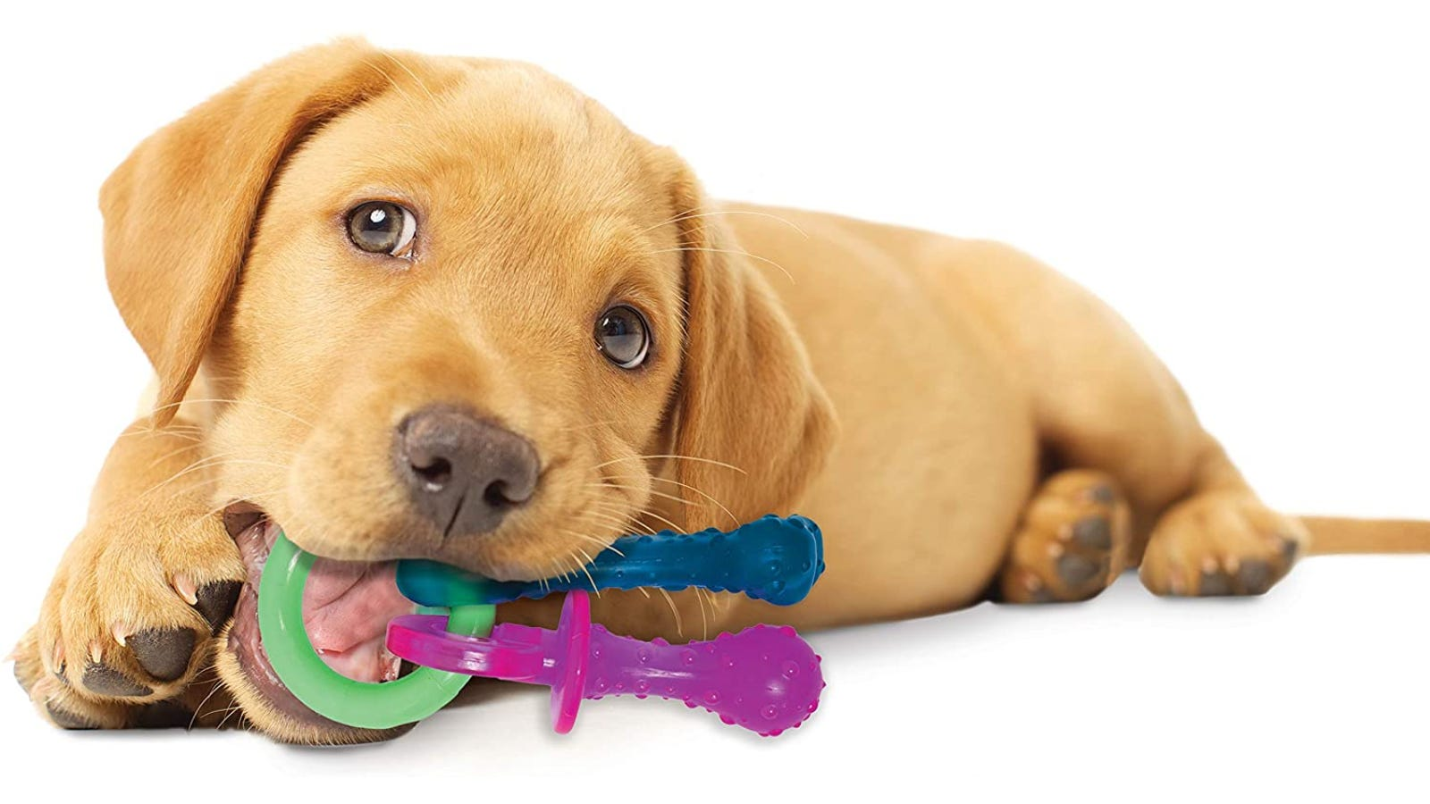 A brown puppy chewing on a toy that a main ring and two hanging attachments.