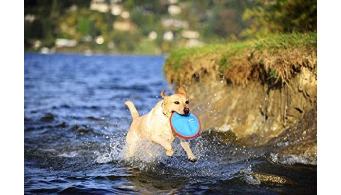 a dog fetching a blue frisbee from water