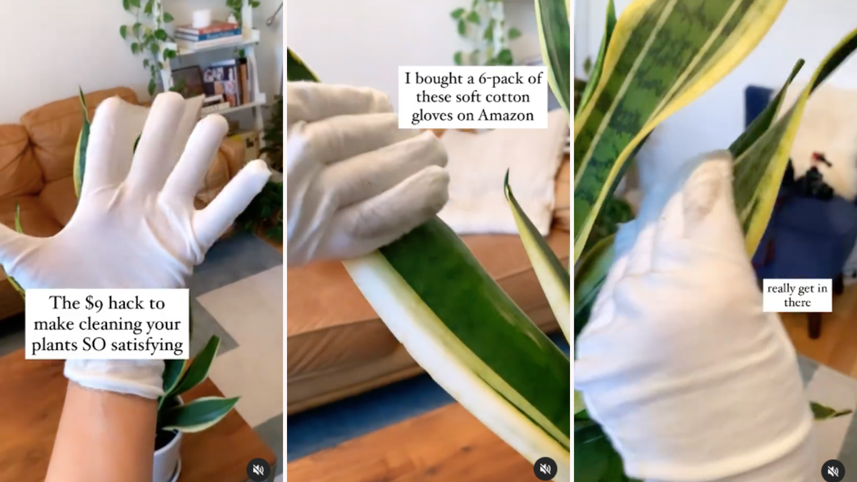 Someone wearing white cotton gloves and dusting the leaves of a faux plant with them.