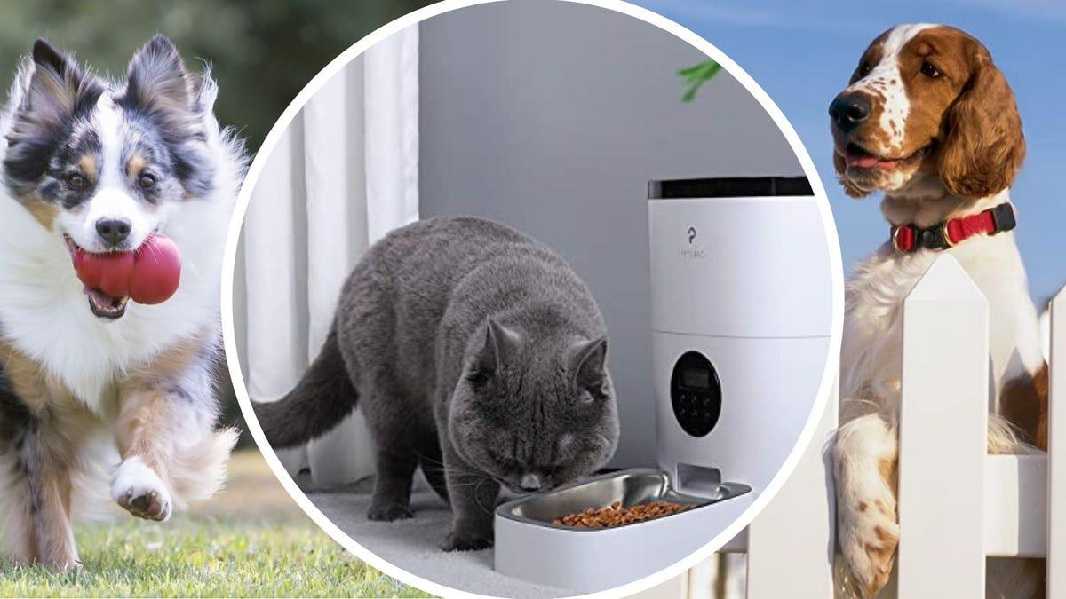 Собака с игрушкой KONG, кошка с автоматической кормушкой и собака со съемным ошейником.