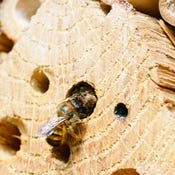 The Best Bee Houses for Your Yard
