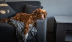 Here's Why Your Dog Always Steals Your Spot