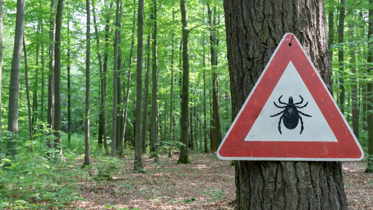 A tick warning sign on a tree in a wooded area.