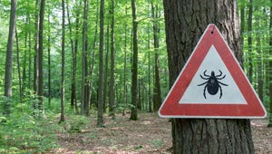 Here's How to Keep Ticks Out of Your Yard All Summer