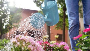 The Best Watering Cans for Gardening