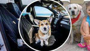 The Best Dog Car Seat Covers to Protect Your Vehicle