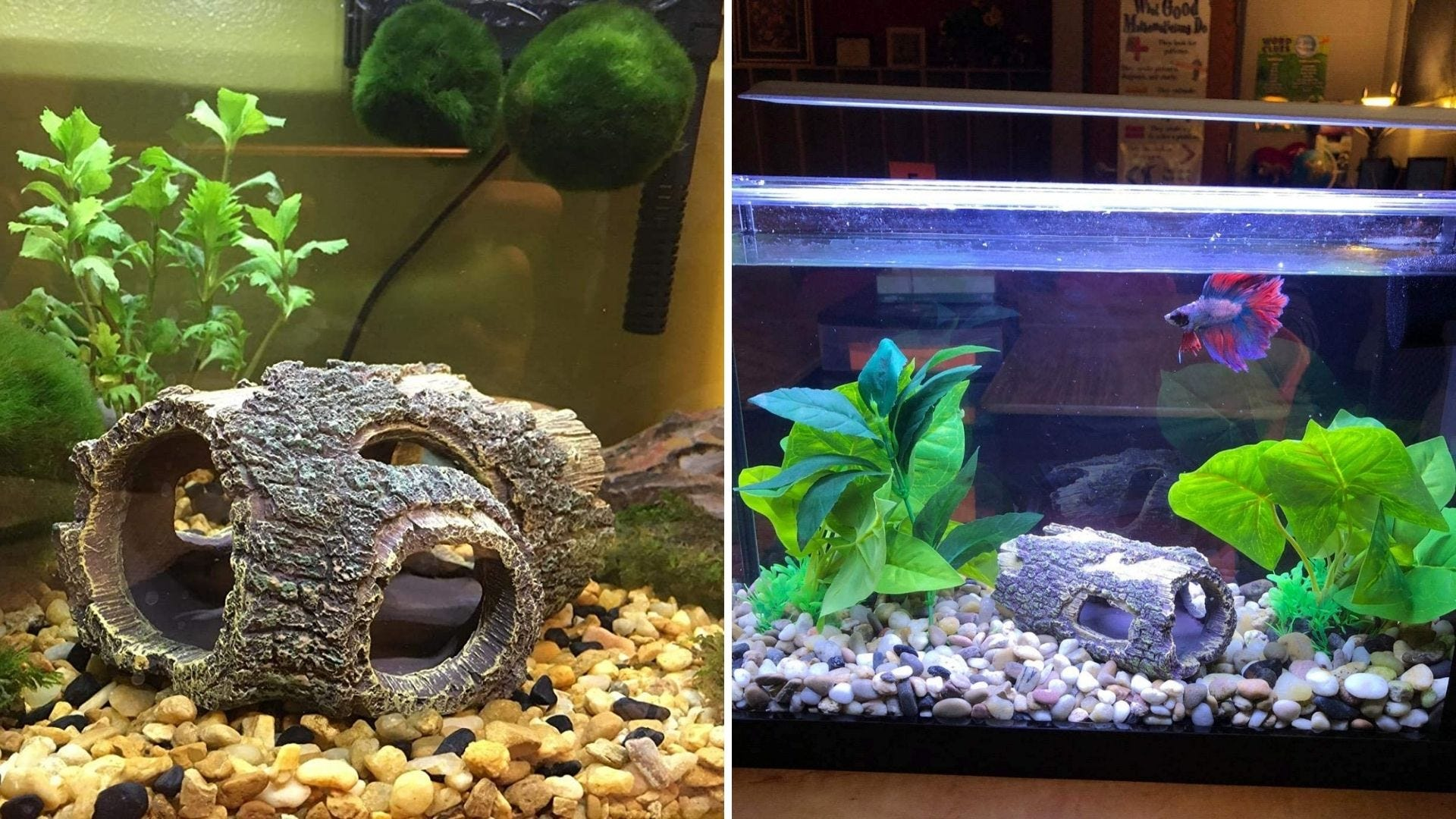 A log is in an aquarium and a fish swims in a tank