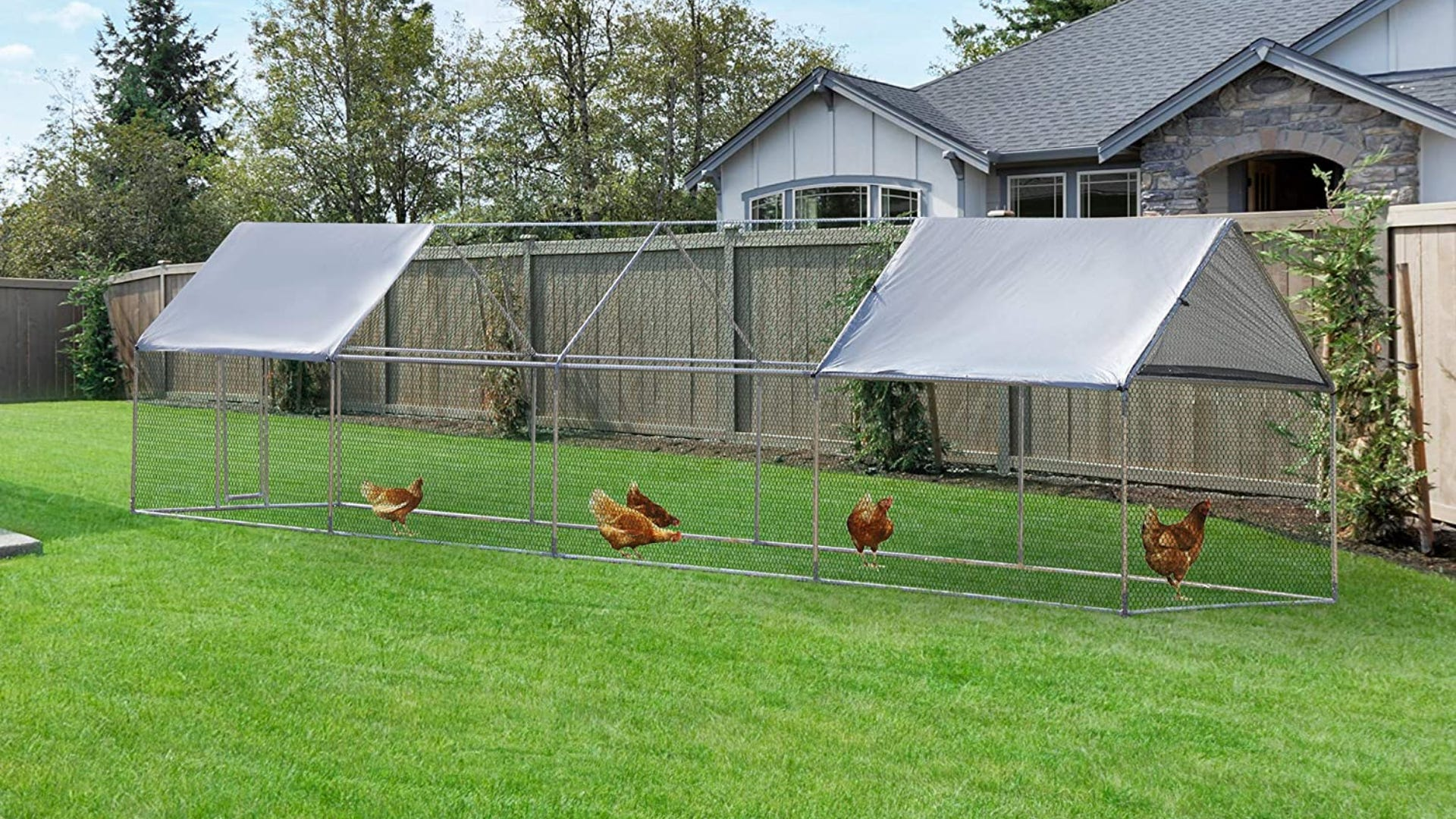 Large chicken playpen set up outside on green grass.
