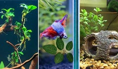10 Things to Know Before Getting a Betta Fish