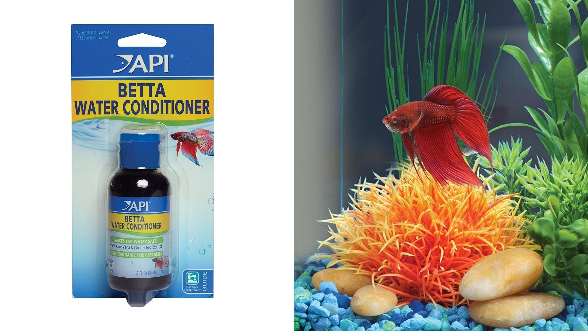 A bottle of water conditioner and a Betta fish swims in an aquarium