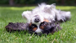 What to Do If Your Dog Has a Belly Rash