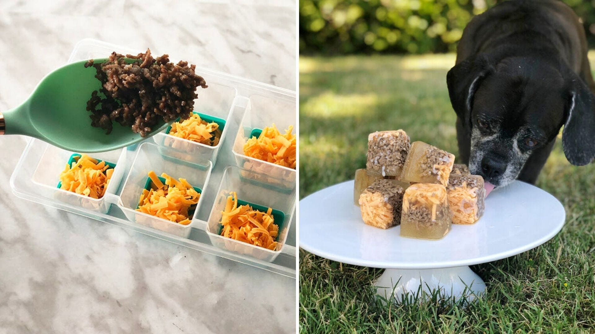 Someone fills ice cube trays with cheese and hamburger and a dog sits in front of a pile of frozen cheeseburger treats