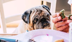 10 Foods That Are Toxic to Dogs