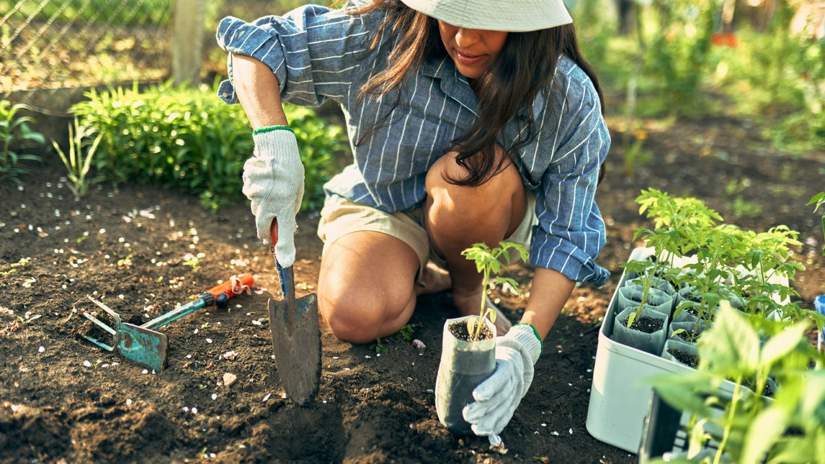 A woman working with a trowel in the garden to grow new plants.