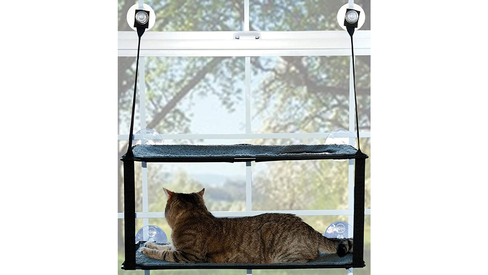 cat laying on a two-tiered, window-mounted shelf