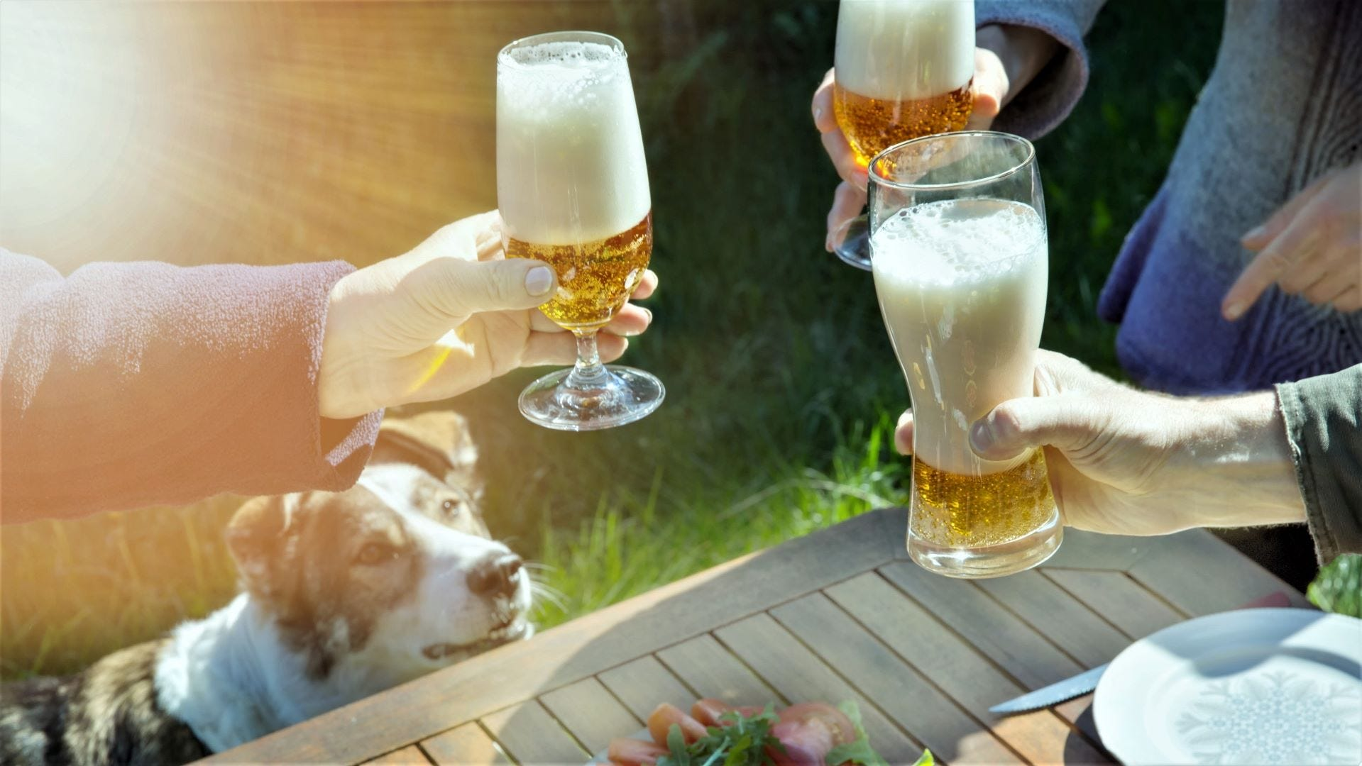 A dog looking at three people toasting with glasses of beer.