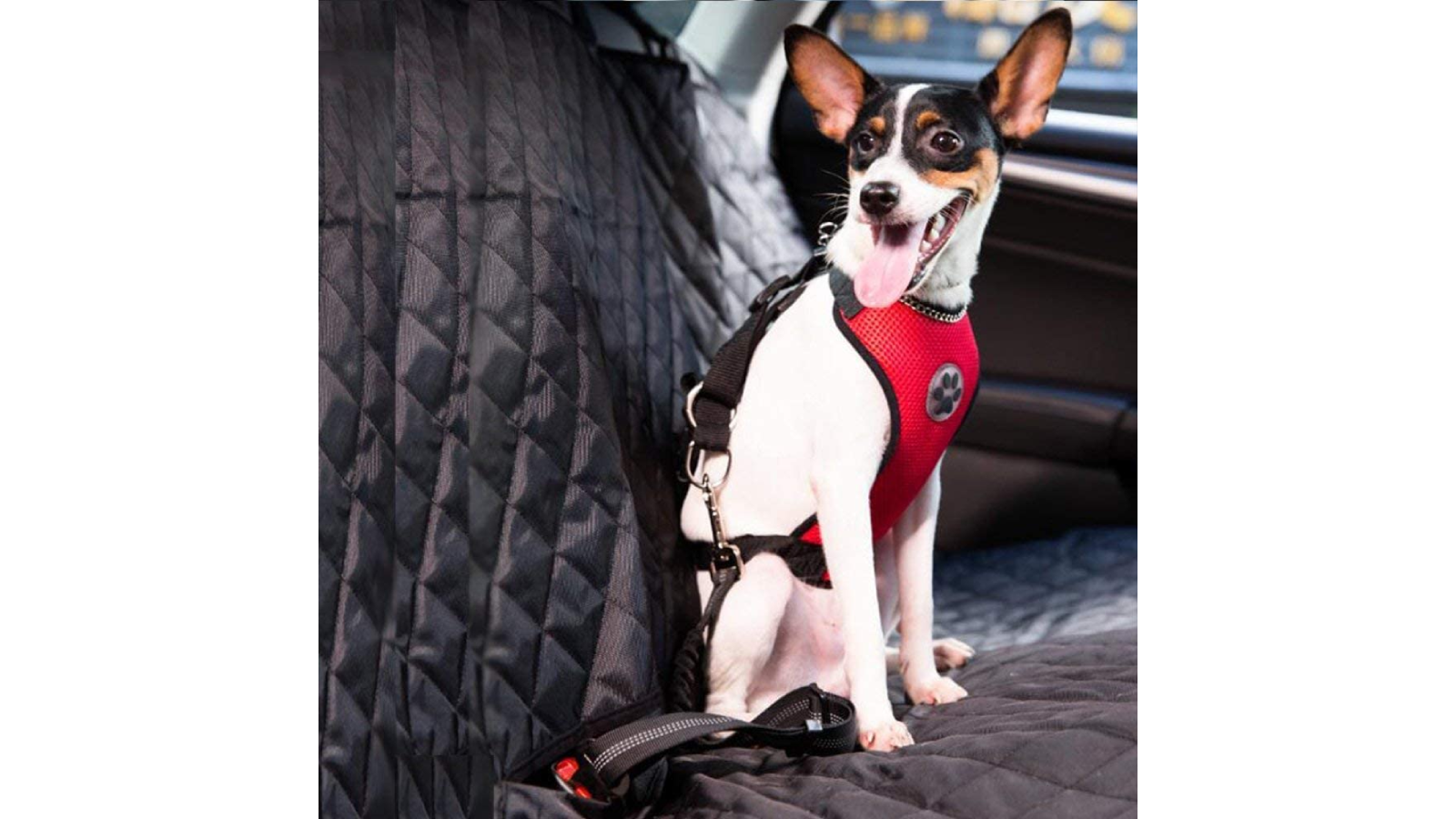 Small dog wearing a red harness seatbelt in car.