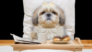 How to Find the Best Care for Your Dog While You're on Vacation