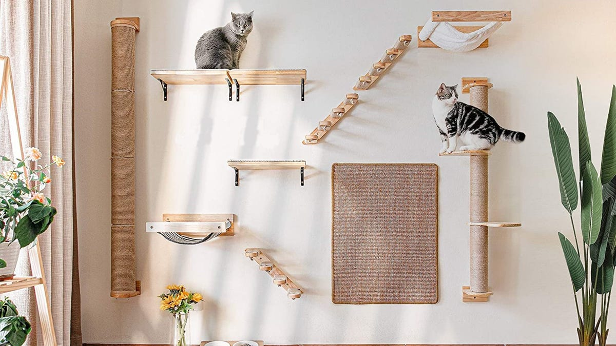 two cats sitting on shelves mounted to a tan wall