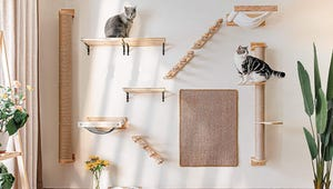The Best Cat Shelves for Your Home