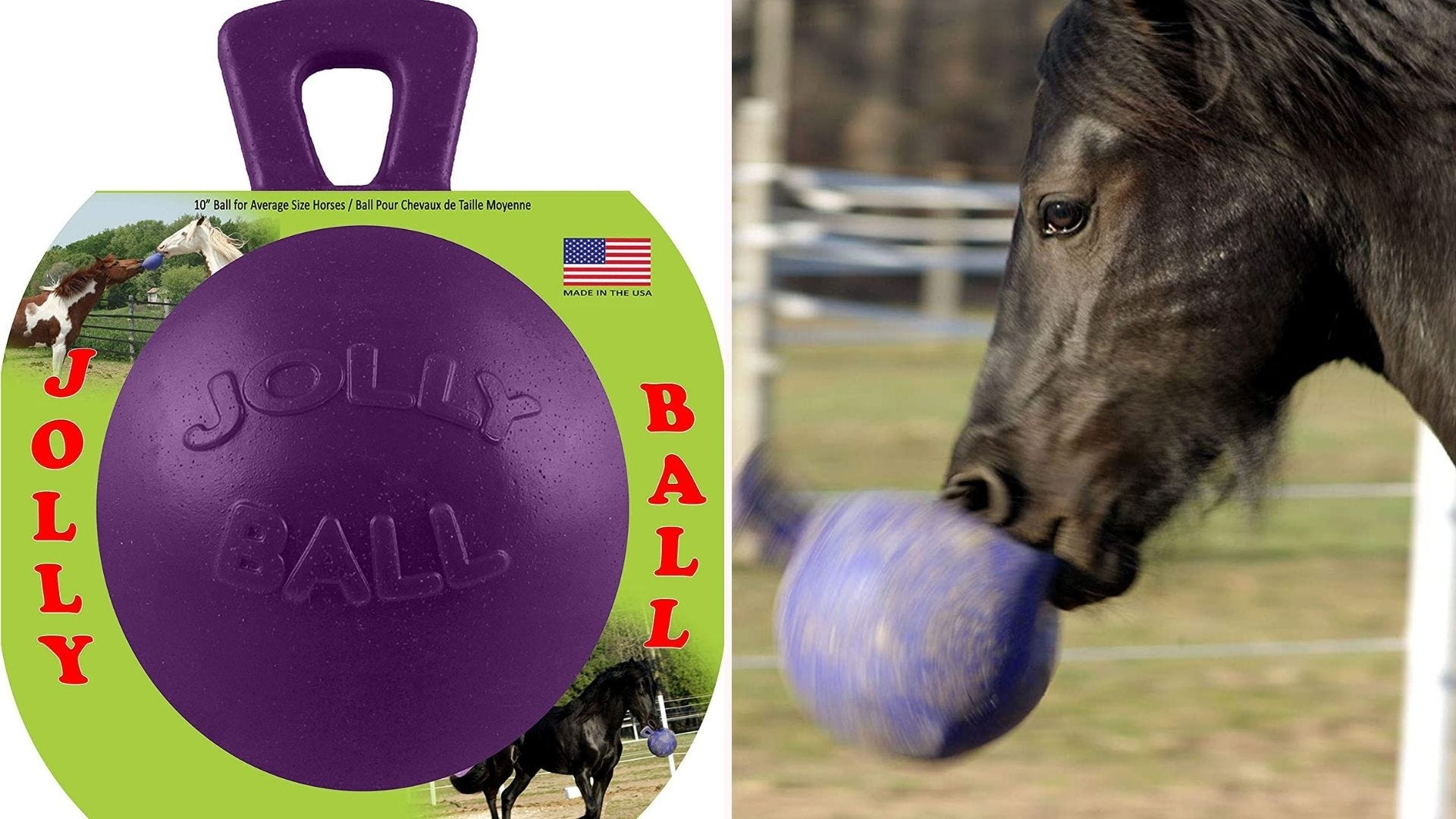 a purple Jolly Ball with a handle on the top is being held in a black horse's mouth