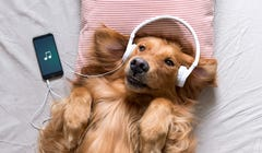 This Composer Will Turn Your Pet Into a Symphony