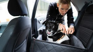 The Best Dog Seatbelts for a Safe Drive