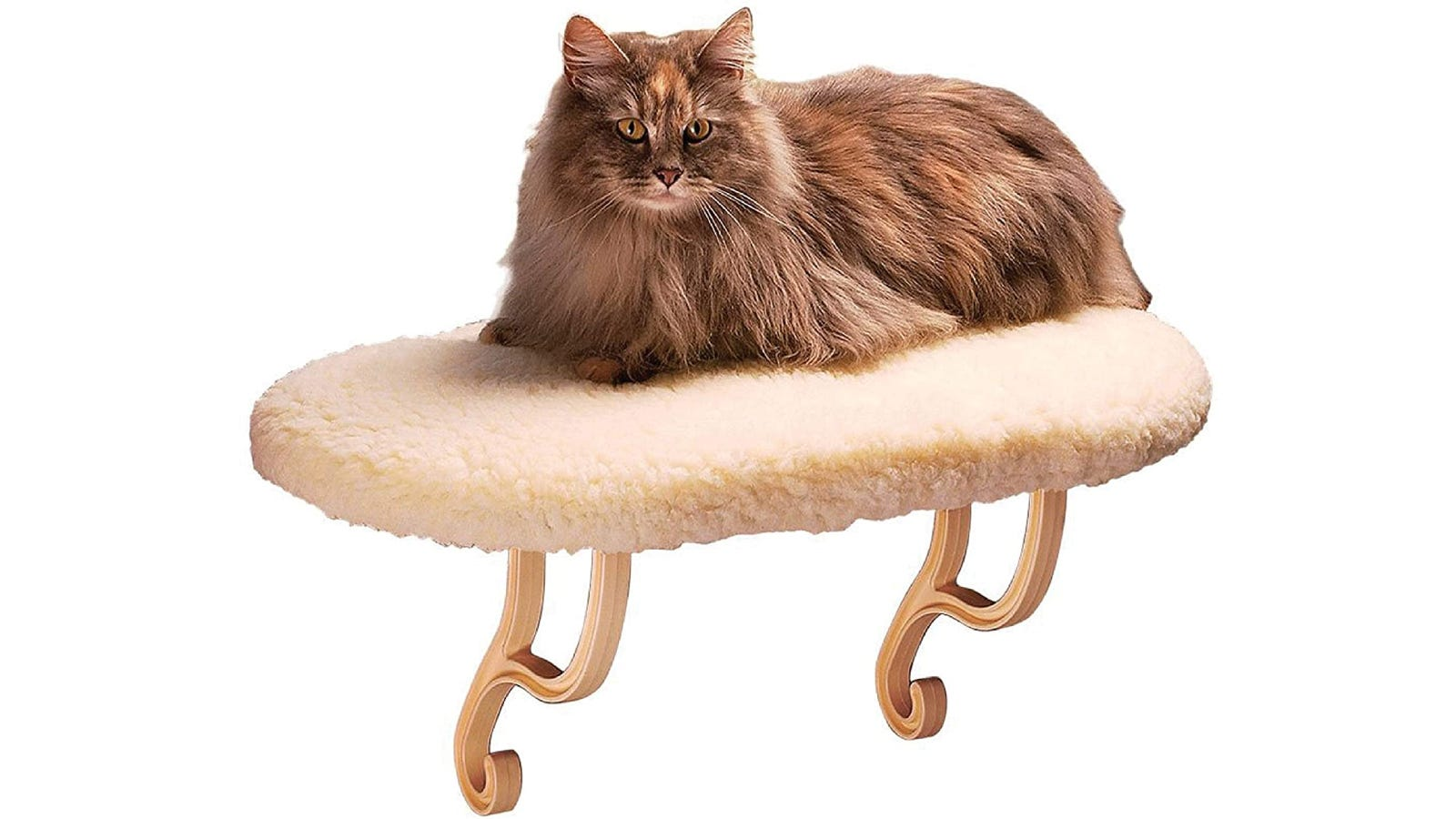 long-haired cat laying on a foam covered shelf