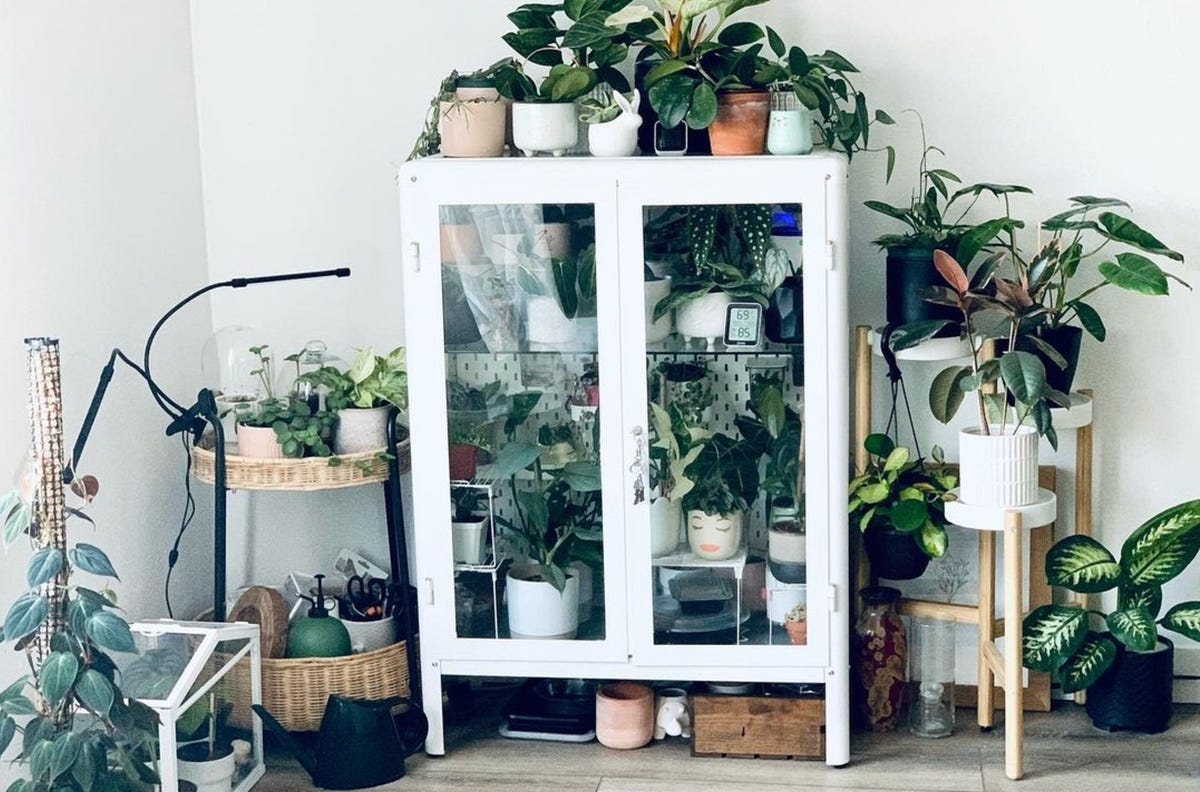 A white cabinet is filled with various plants as well as surrounded by multiple potted houseplants.