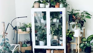 IKEA Greenhouses Are Social Media's Latest Plant Trend