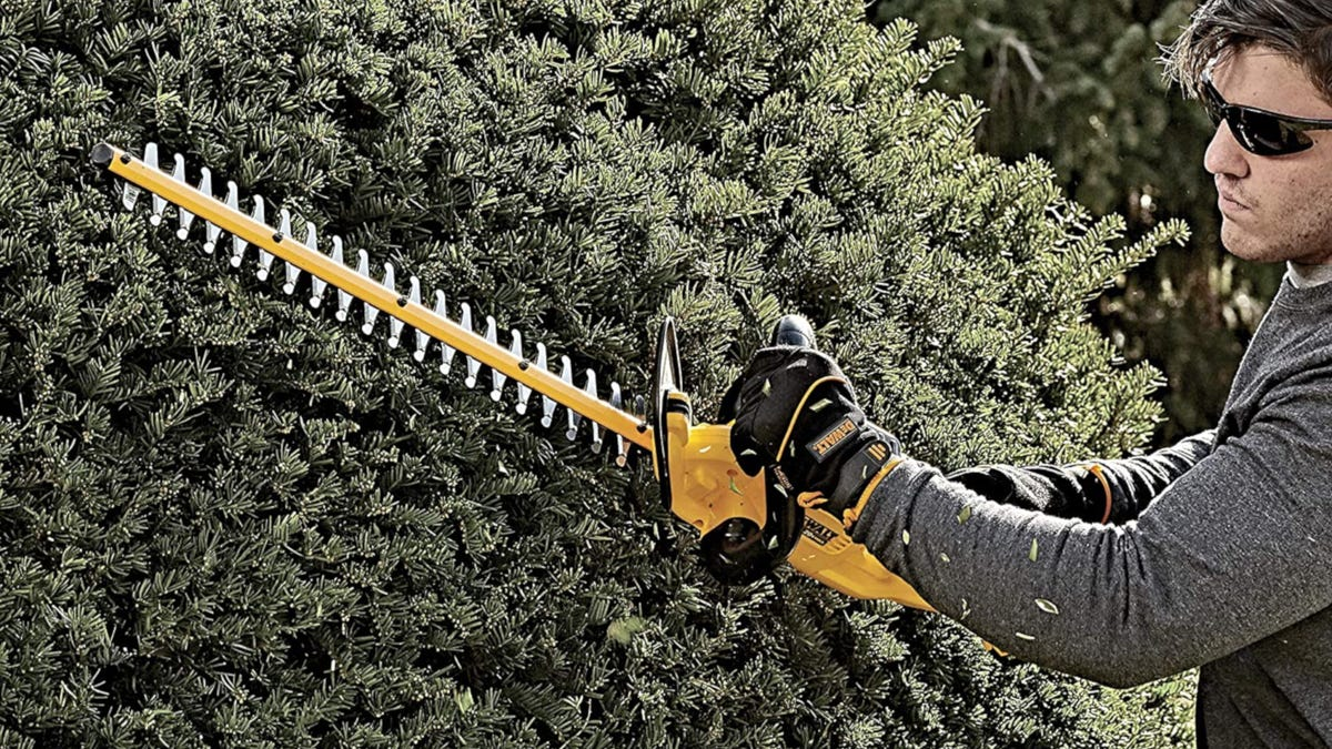 Man trimming hedges with yellow DeWalt cordless hedge trimmer