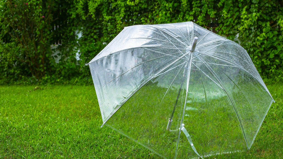 a clear bubble umbrella sits on grass.