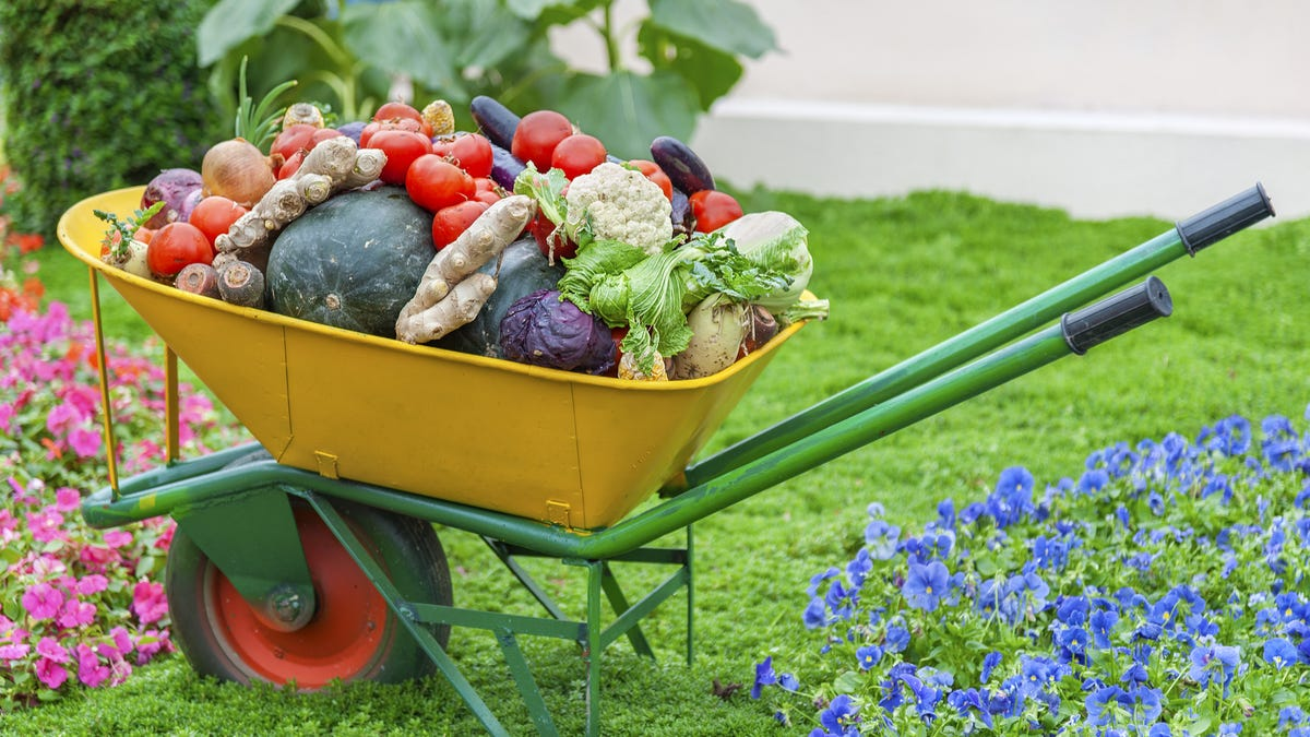 A wheelbarrow is filled with different garden vegetables.