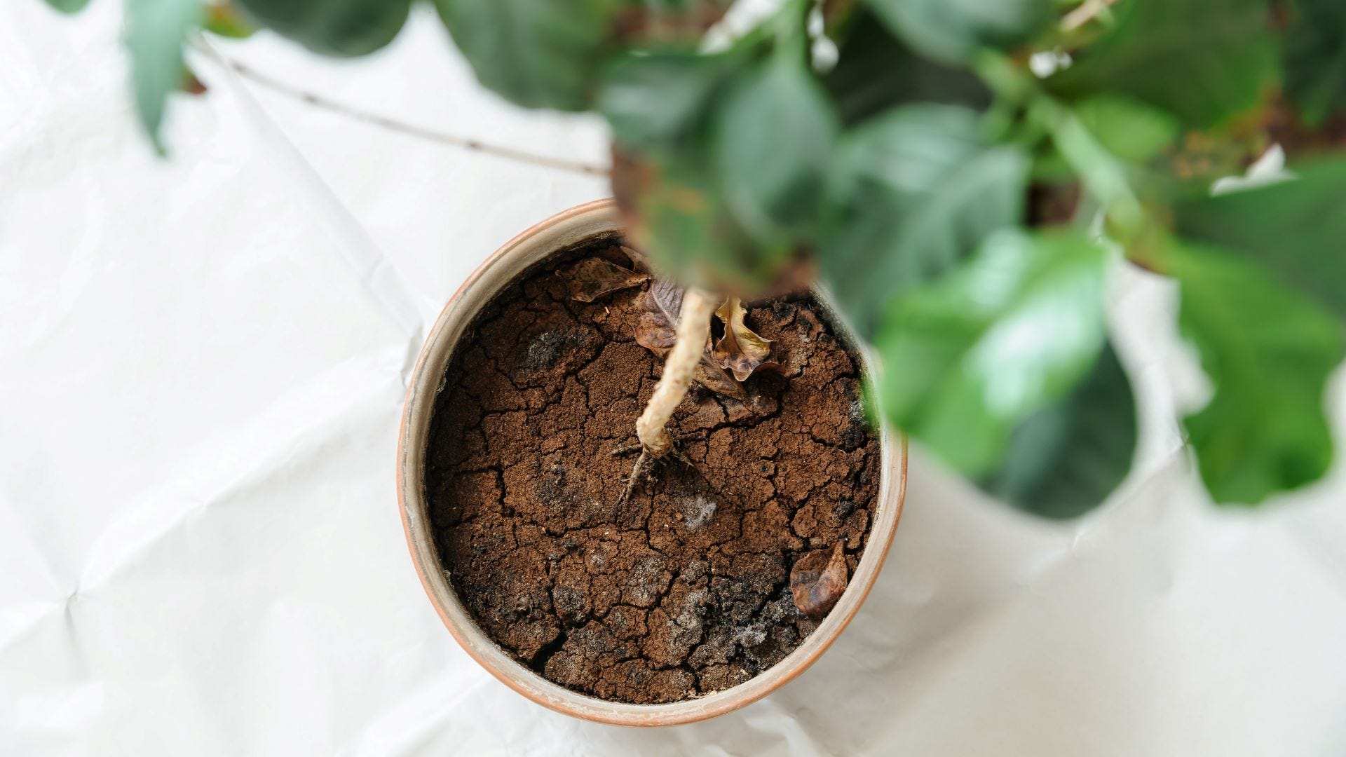 Dry soil in a plant.