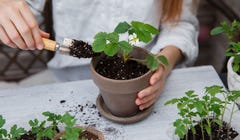 5 Signs It's Time to Repot a Plant