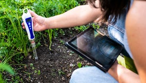 The Best Soil Test Kits to Maintain a Healthy Garden