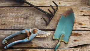 Need to Remove Rust From Your Gardening Tools? Look in the Fridge